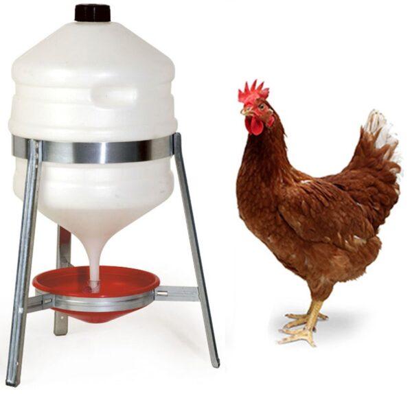 Abbeveratoio polli