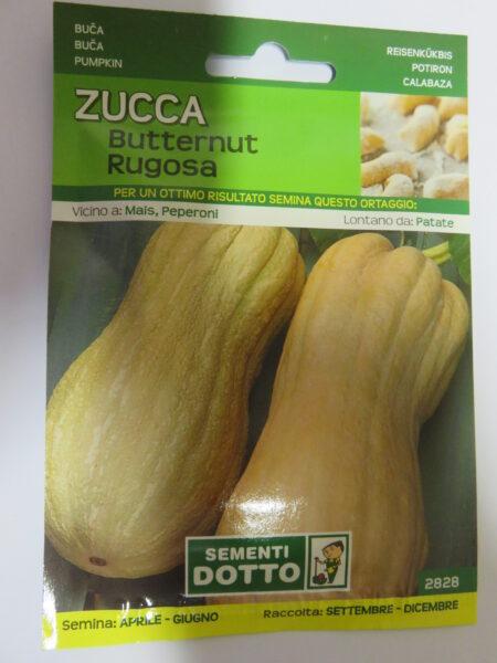Zucca Butternut Rugosa