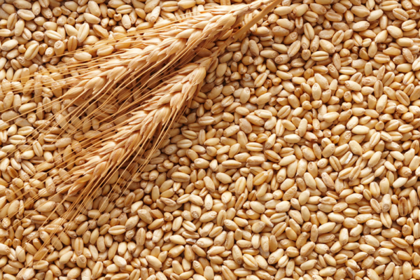 Frumento in grano