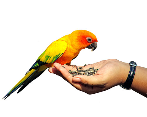 Mangime per ornitologia
