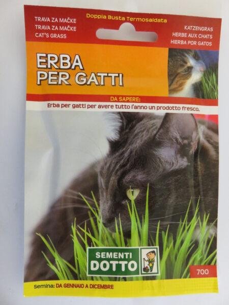 Erba per gatti